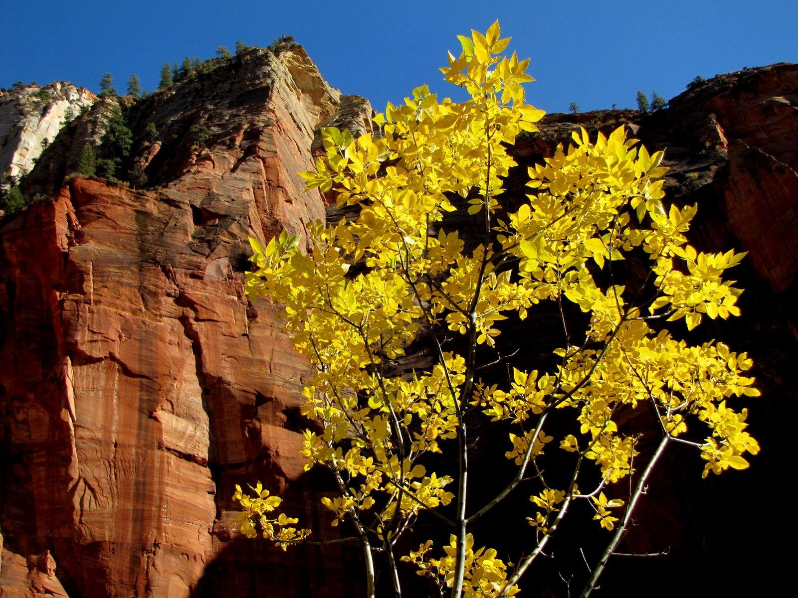 Sárga levelek  Yellow leaves