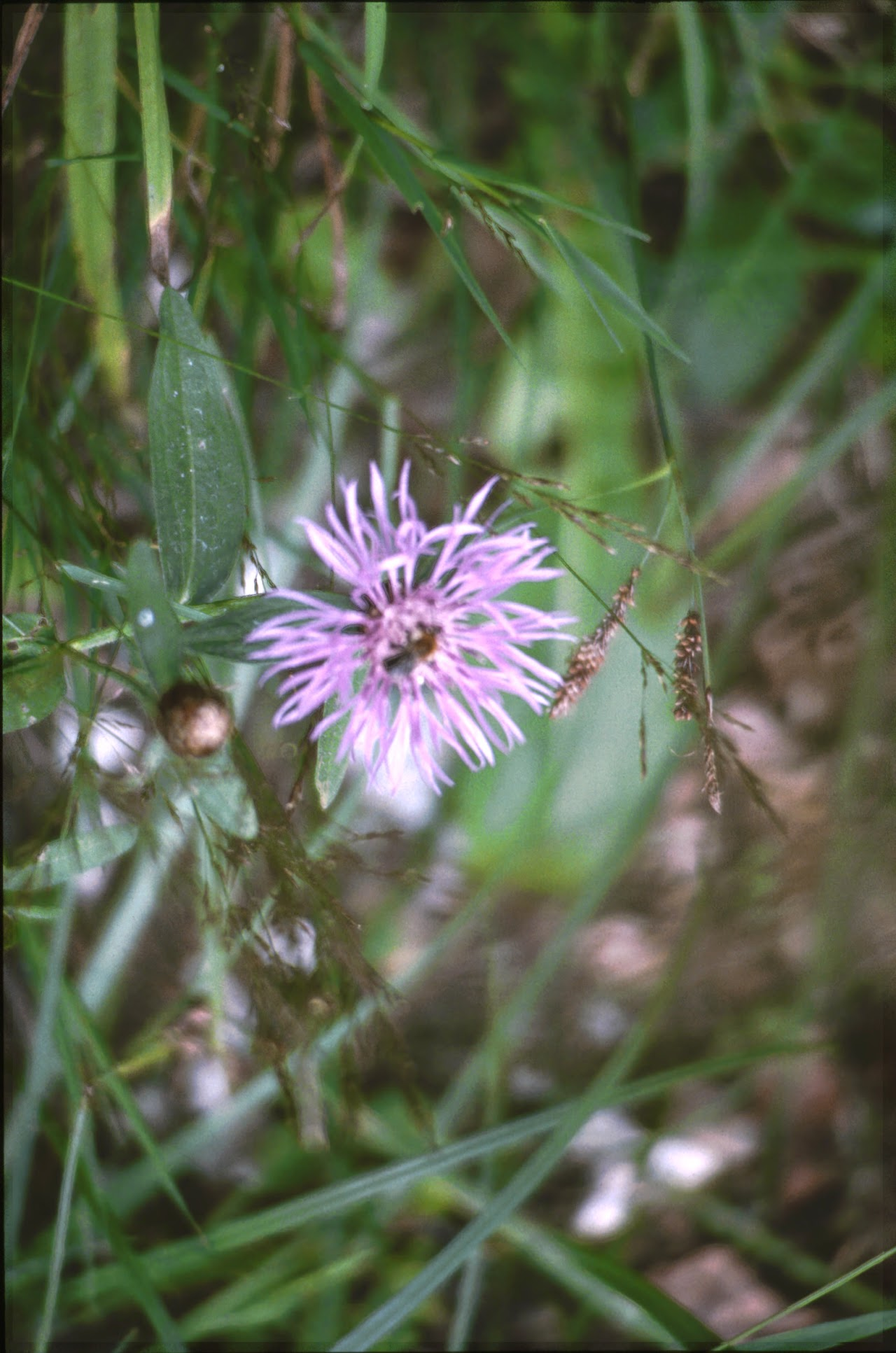 1994 Sommerlager - Sola94_022