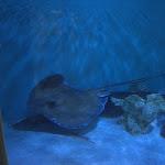Florida Aquarium - 7 Dec 2012