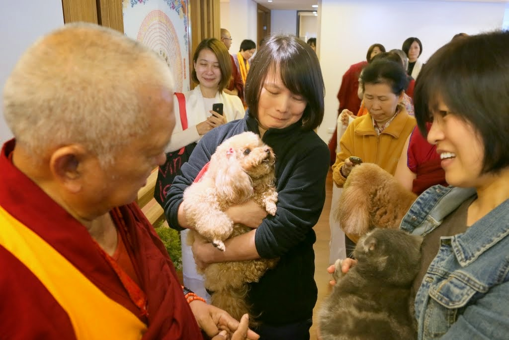 Lama Zopa Rinpoche blessing pets at Jinsiu Farlin, Taipei, Taiwan, April 2014. Photo by Ven. Thubten Kunsang.