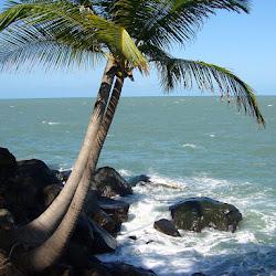 2006 - Guyane