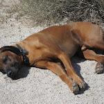 Diesel the Desert Dog