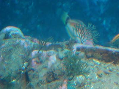 Milford Deep (under water observatory)