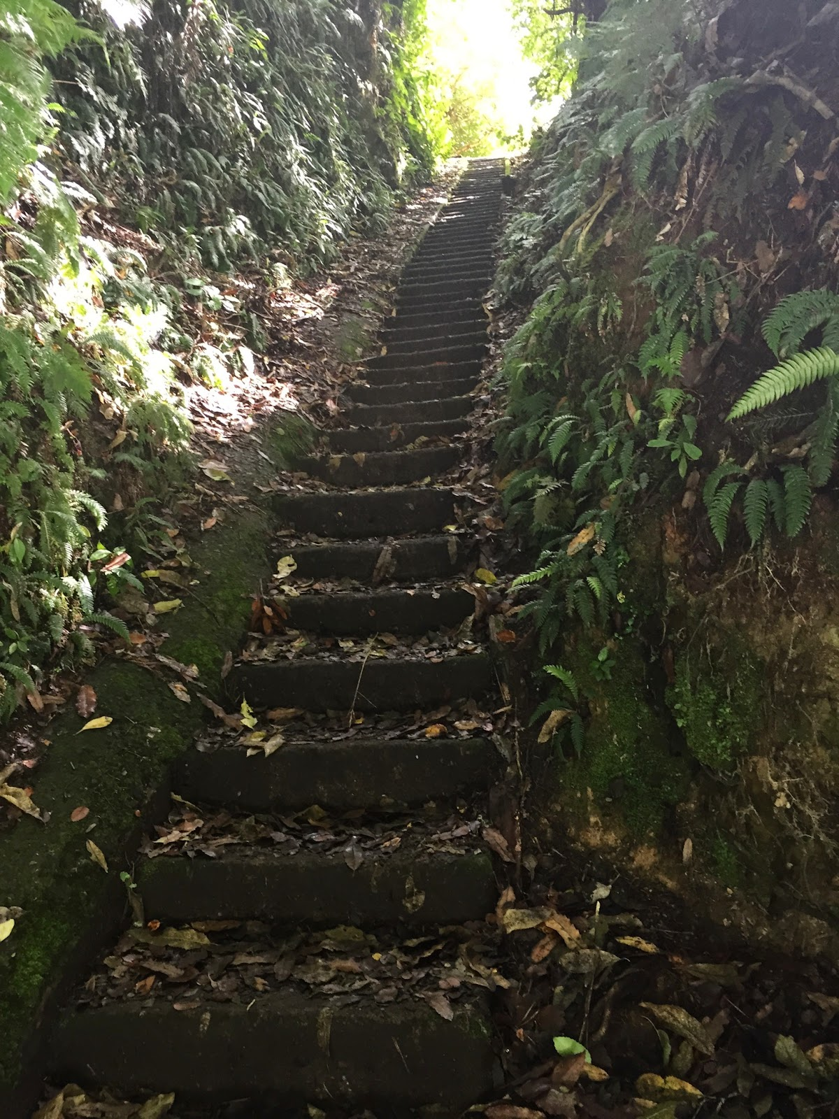 The steps back up :(