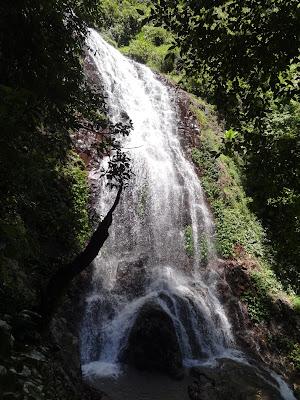 Tristania Falls, Dorrigo National Park