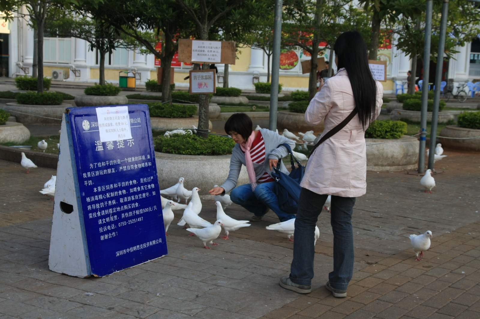 Overgrown Chinese pigeons