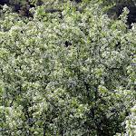 Banyeres-Font de la Coveta-Reiner-Font Freda - 22.5.16