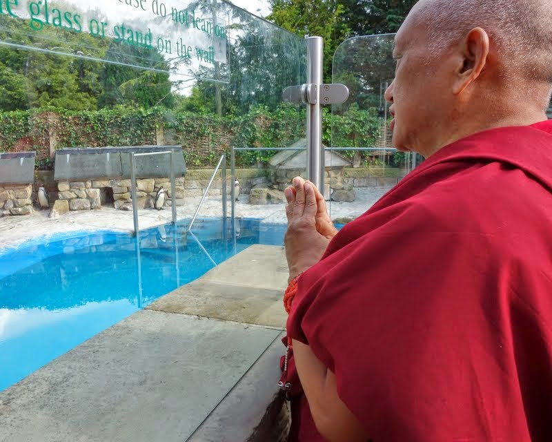 Lama Zopa Rinpoche blessing the penguins at the gardens of Harewood House, Leeds, UK, July 2014. Photo by Ven. Roger Kunsang.