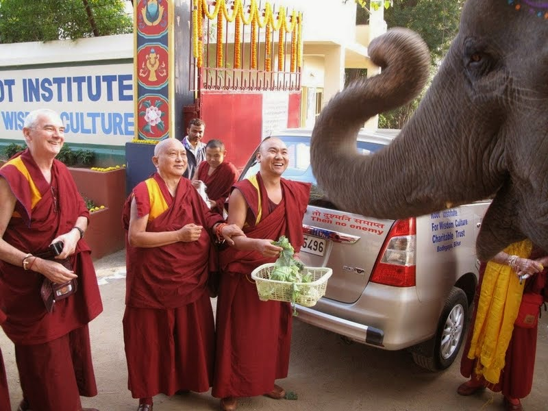 Ven. Roger Kunsang, Lama Zopa Rinpoche and Ven. Tendar feeding Bodhichitta, the elephant, Root Institute, Bodhgaya, India, January 2014. Photo by Ven. Trisha.