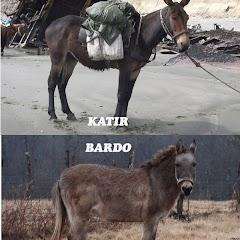 Bardo-Hinny-Katır