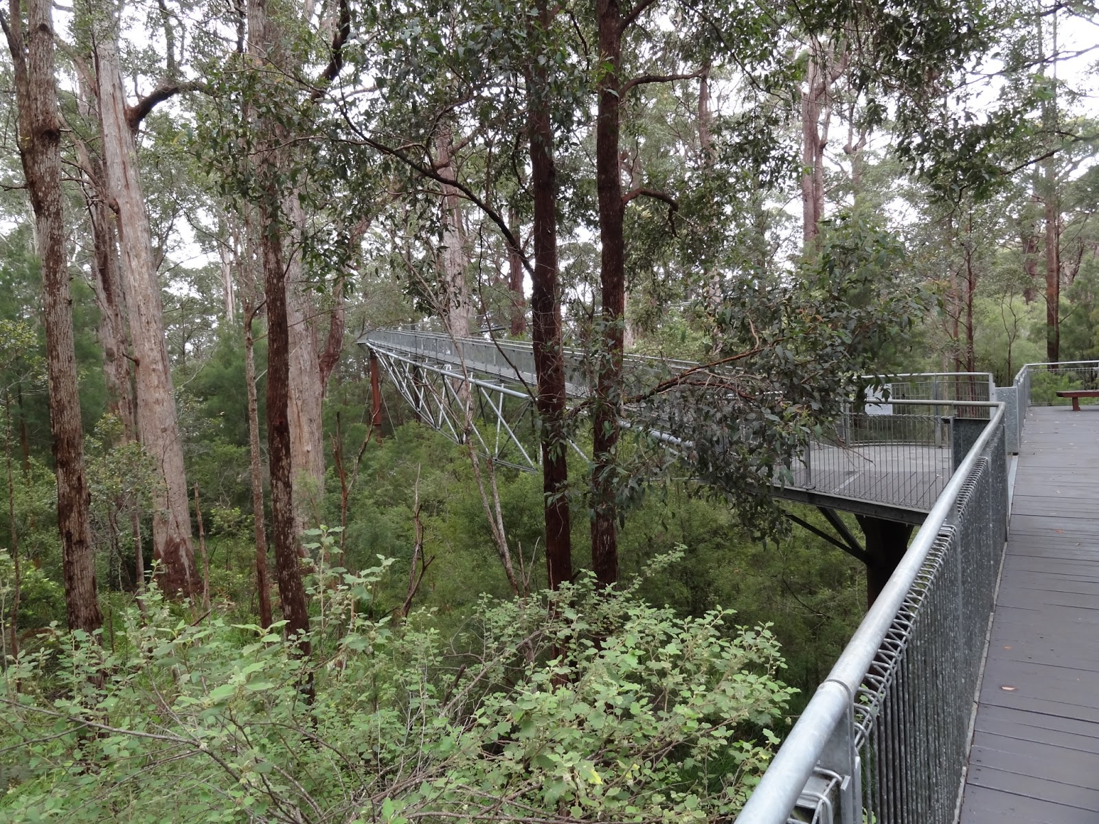Tree top walk @ Valley of the Giants. The platform was 40m above the ground