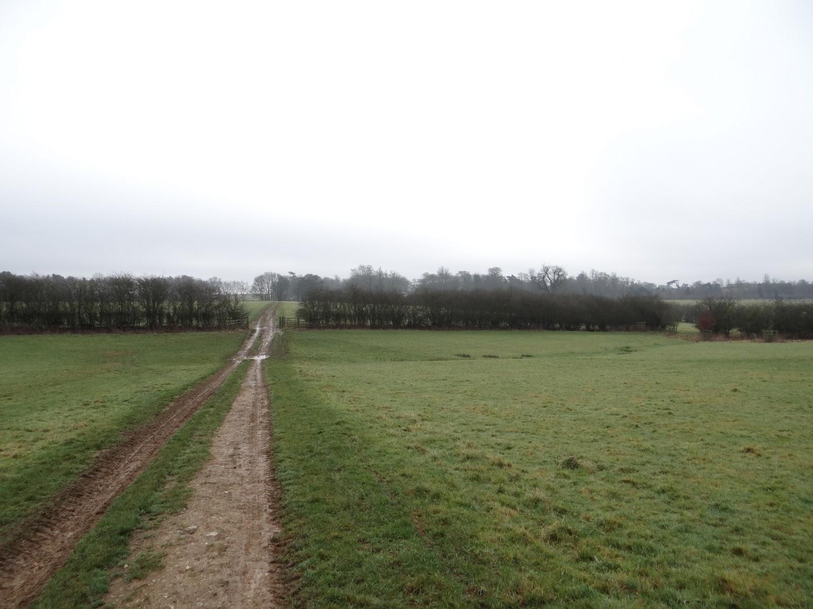Muddy Pathways