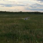 Повидавший много сезонов Spitfire IX