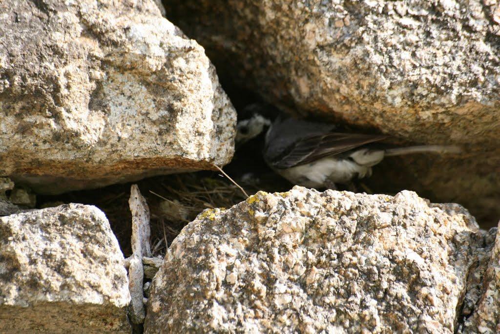 Un oiseau fait son nid