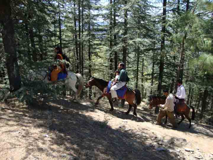 Horse riding at Naldehra