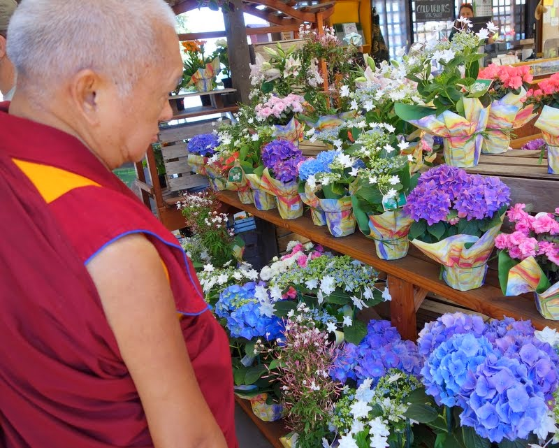 Lama Zopa Rinpoche shopping for more flower offerings, Aptos, California, May 2014. Photo by Ven. Roger Kunsang.