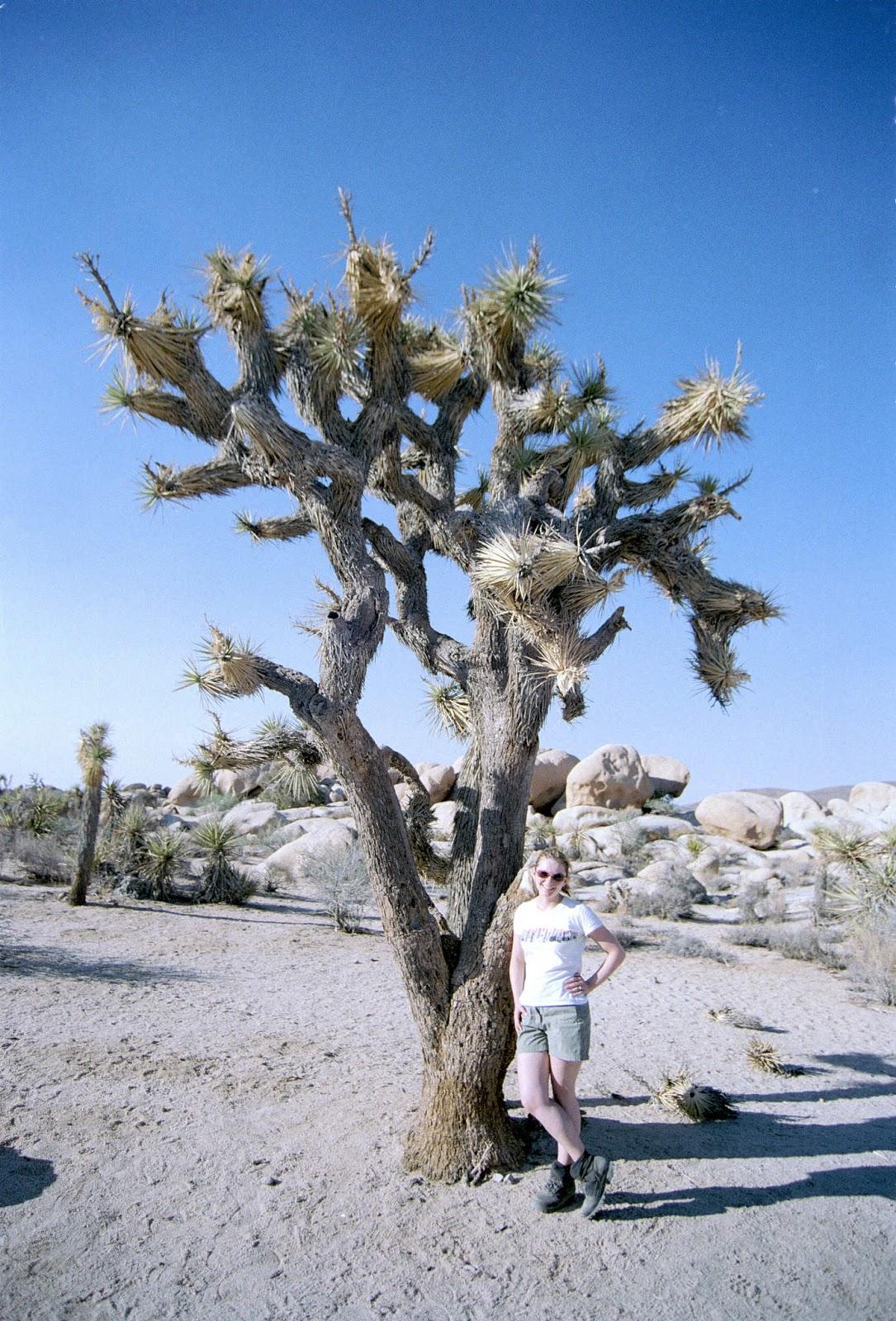 Kas & a Joshua Tree