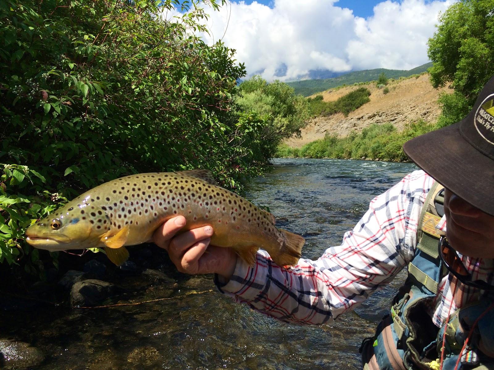 Provo River Gold