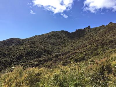I climbed to the top of Whangarei Heads