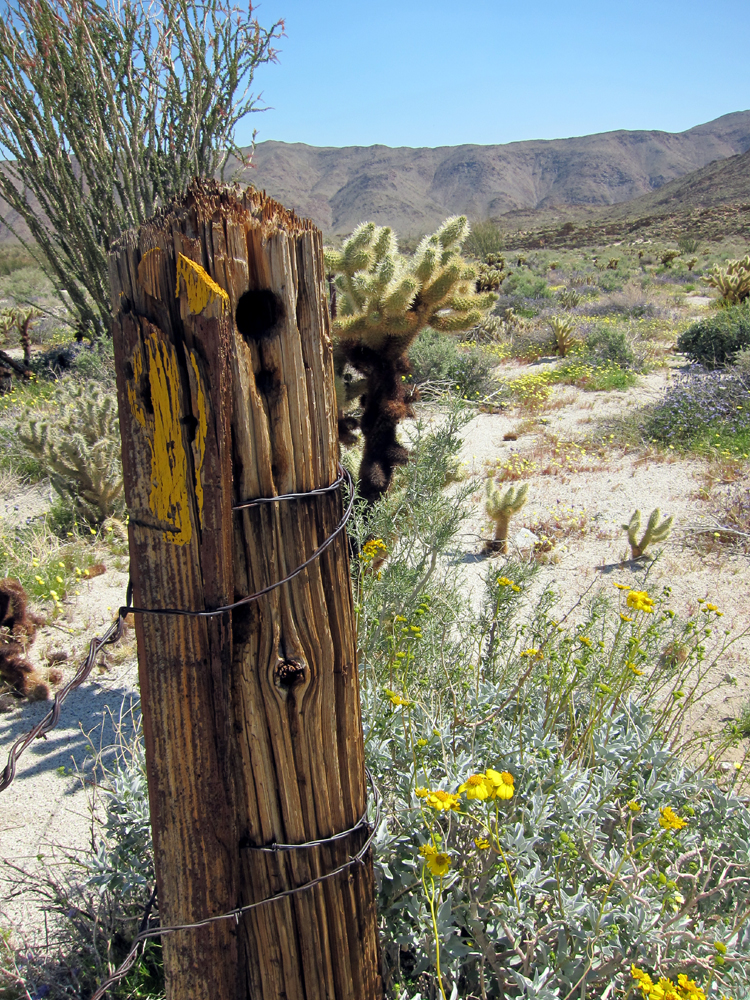 Old cattle fence post in Rockhouse Canyon - Anza Borrego