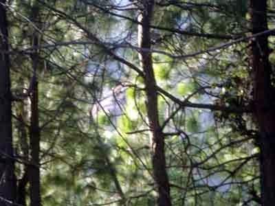 Jungle near Sunrise Villa Shimla