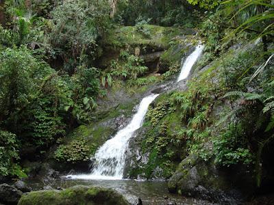 Waterfall bush walk