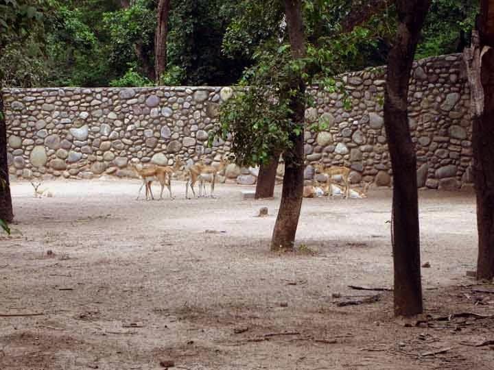 animals at Chattbir zoo Chandigarh