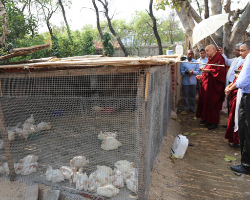 Lama Zopa Rinpoche blessing chickens at Root Institute, Bodhgaya, India, February 2015. Photo by Ven. Thubten Kunsang.