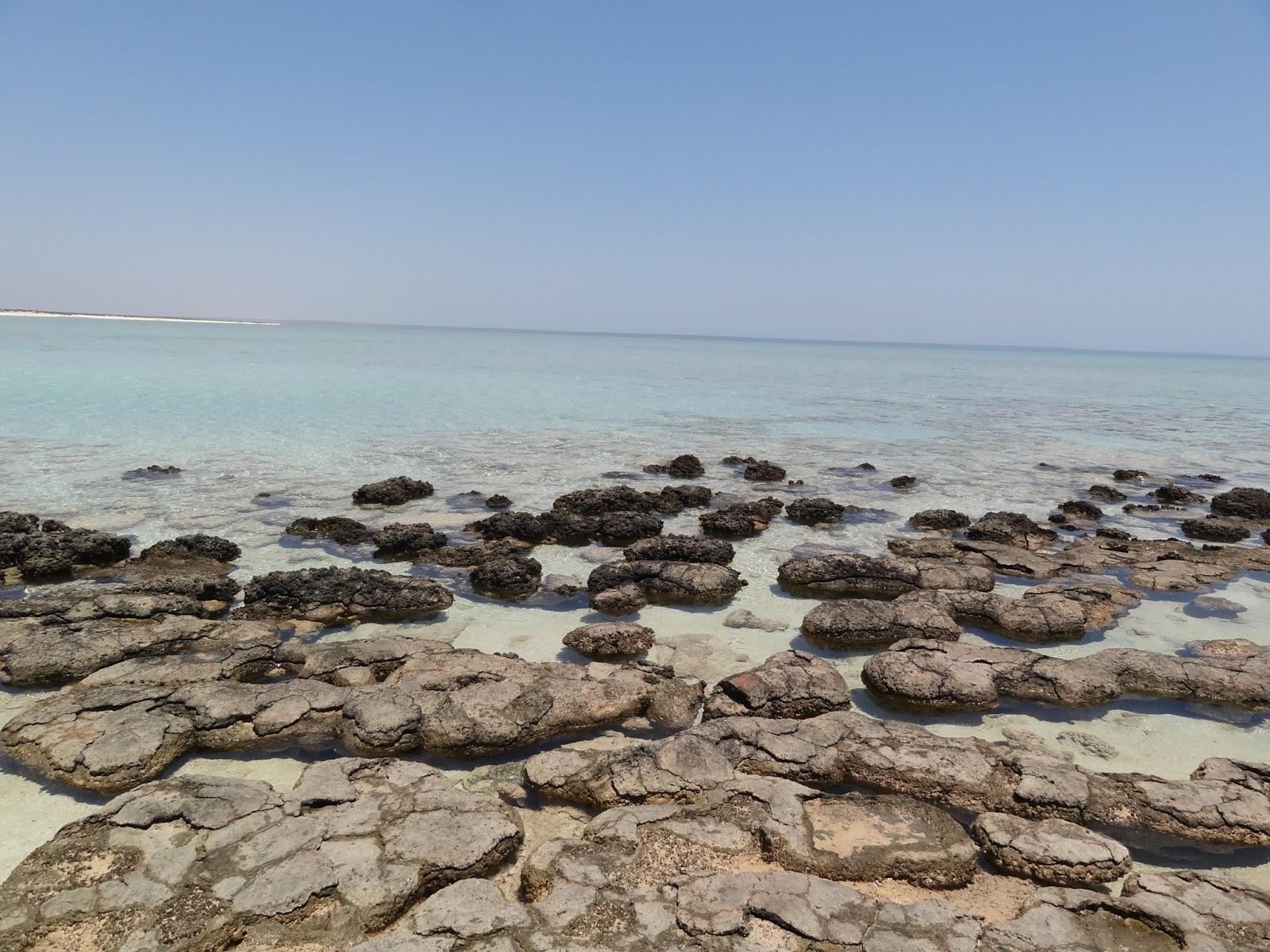 Stromatolites at Hamelin Pool