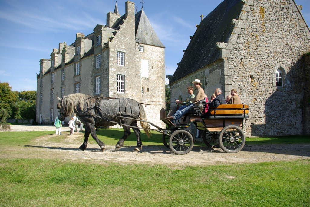 Ballade en attelage avec les percherons après la visite du château