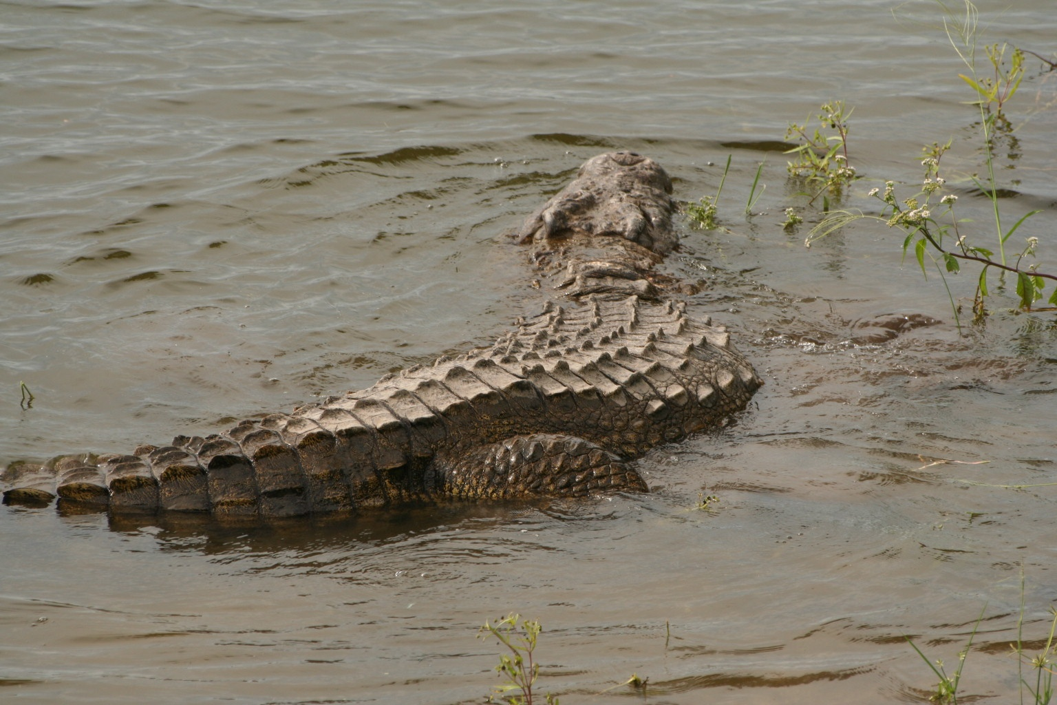"""""""It's a river - of course there are crocodiles!"""""""