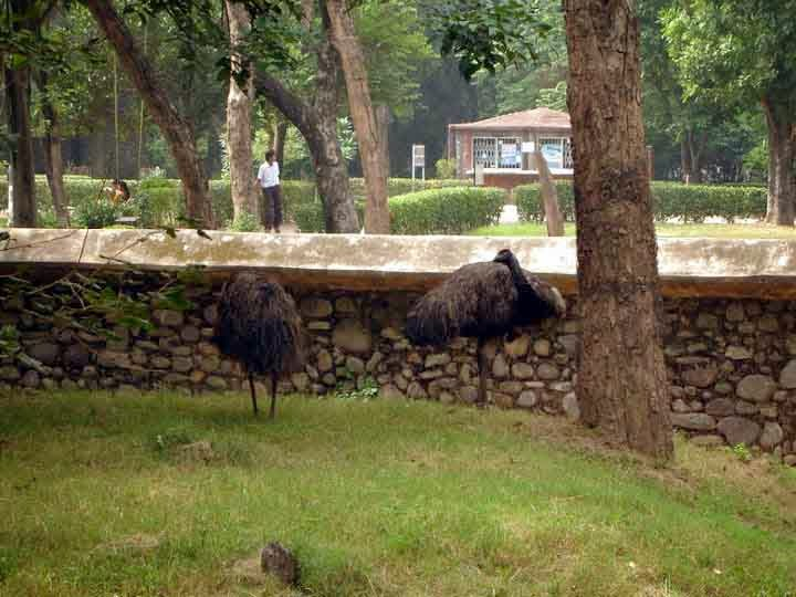 ostric hat Chattbir zoo Chandigarh