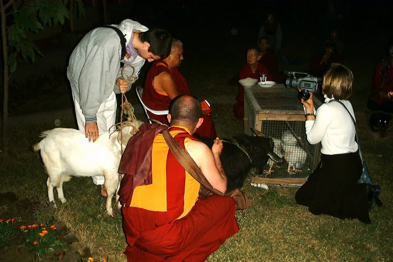 Lama Zopa Rinpoche blessing chickens and goats