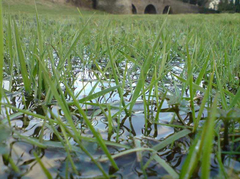 Les pâtures bien humides