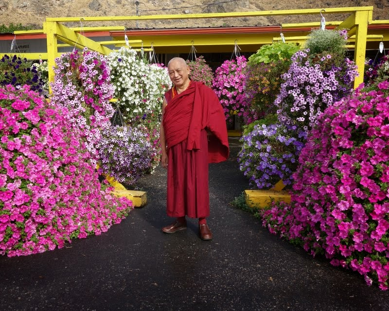 After arriving in Washington, Lama Zopa Rinpoche shopped for extensive flower offerings for the new Amitabha Buddha statue, driving as far as two hours away looking for flowers, US, July 2014. Photo by Ven. Roger Kunsang.