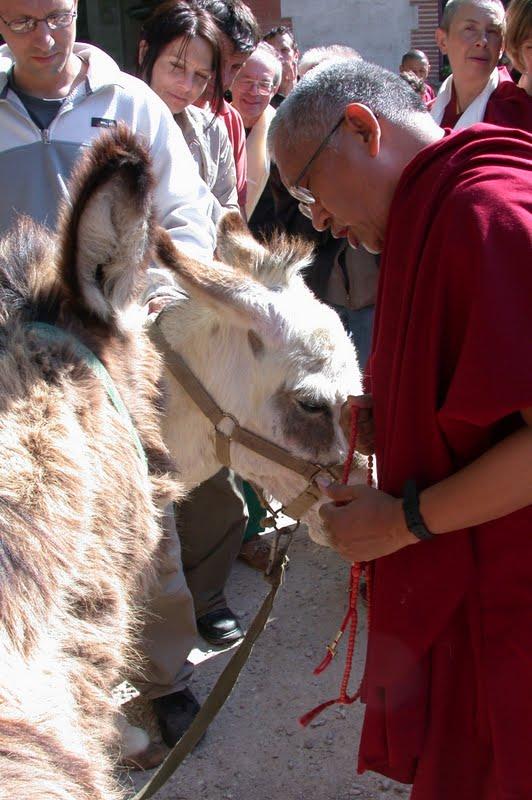 Lama Zopa Rinpoche blessing donkey in Kopan Monastery