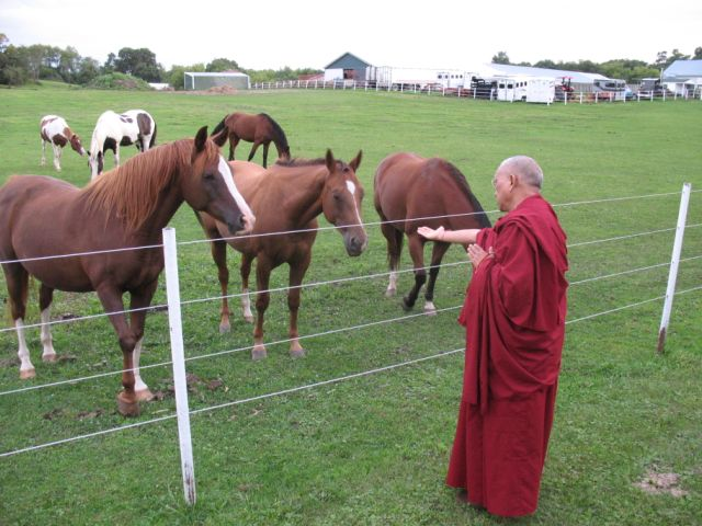 Lama Zopa Rinpoche reciting mantras for horses