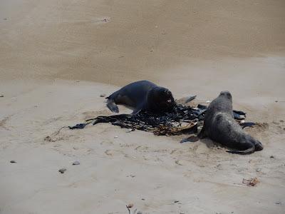 Some local Sea Lions at Waipapa