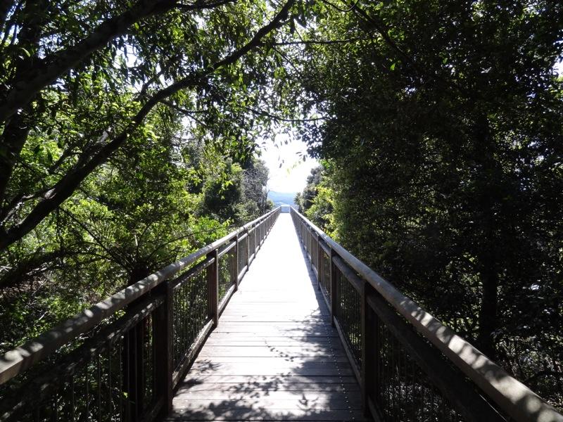 Skywalk, Dorrigo National Park