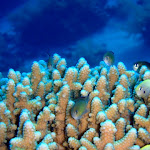 2011-01-03 - Sharm El Sheikh