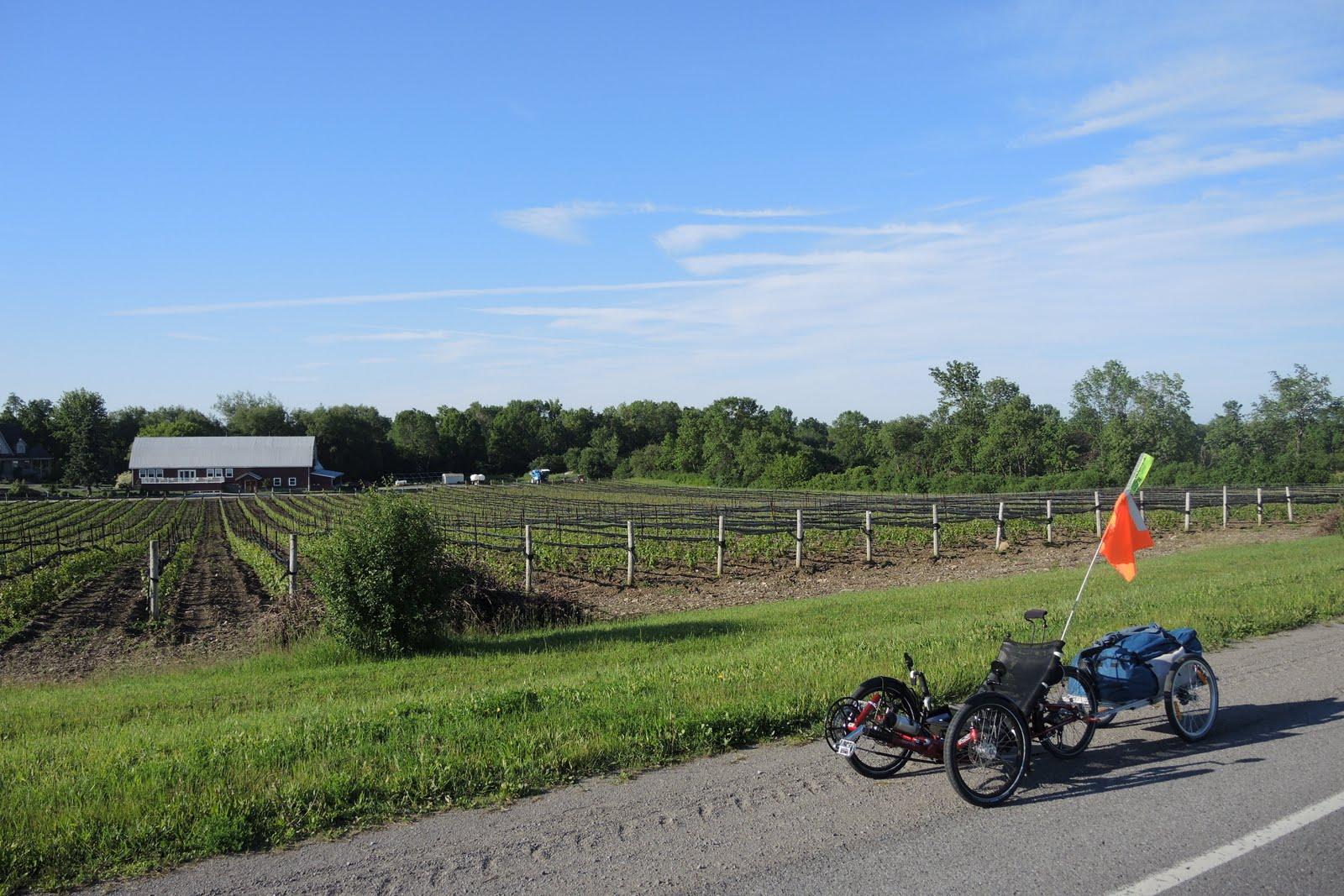 Route des vignes dans le Comté du Prince Edward