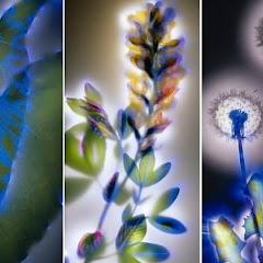 Elektrikli Bitkiler
