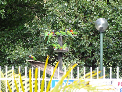 bird feeding 4x a day for the guests :)