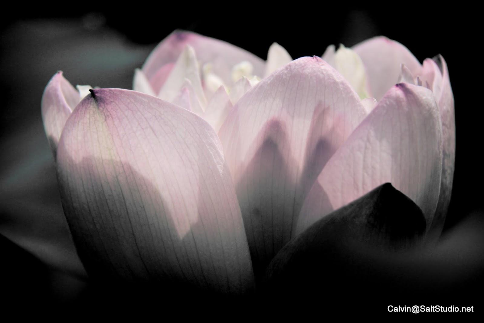 Flower(Plant)