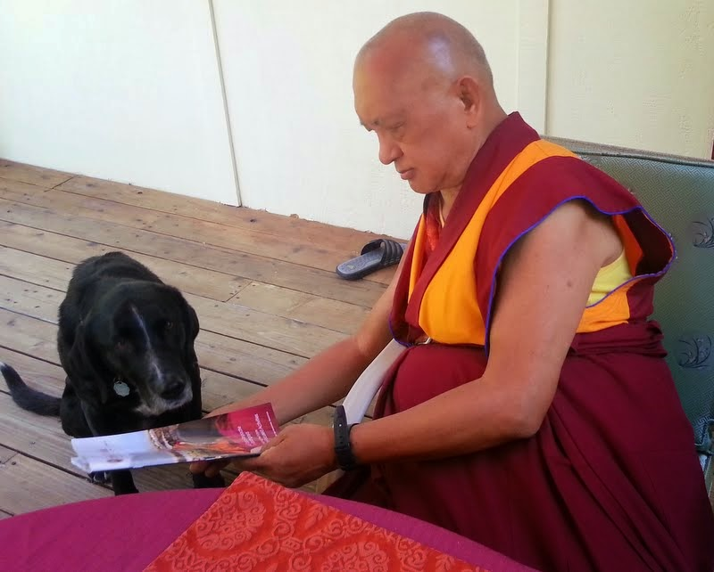 Lama Zopa Rinpoche sharing the new issue of Mandala with Uma, Kachoe Dechen Ling, Aptos, California, June 2014. Photo by Ven. Roger Kunsang.