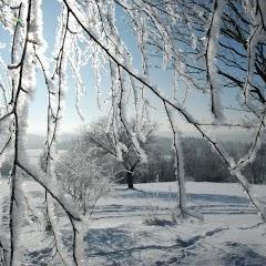 Ladovská zima 2010