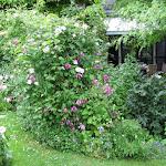 Mr & Mrs Folschette's Garden