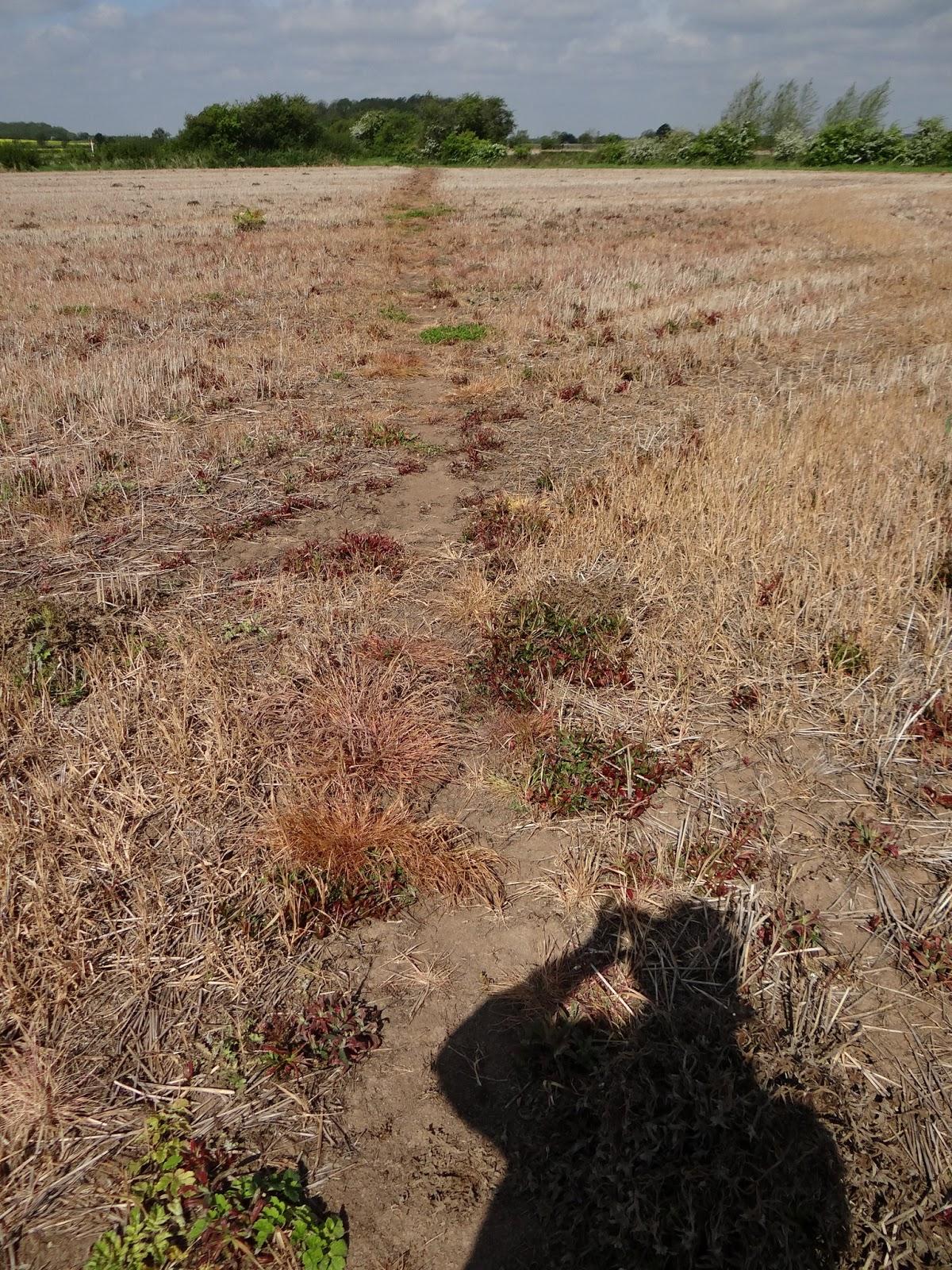 Where's the Path ?