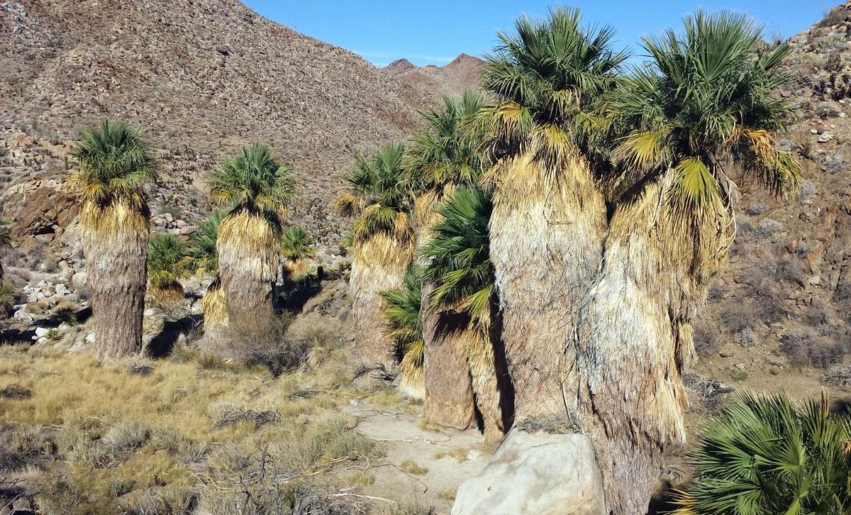 Oasis in a remote corner of the Anza Borrego Desert.