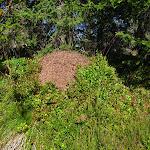 Aby to mravenci neměli na borůvky daleko...